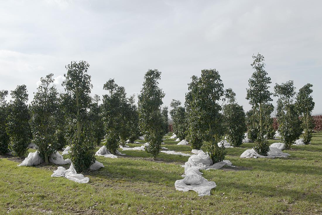Troebel Landschap - Hooge Aard, 2011 - Hans van Asch