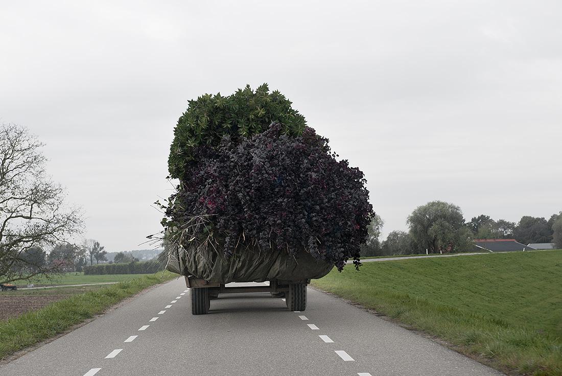 Troebel Landschap - Neder-Betuwe, 2010 - Hans van Asch
