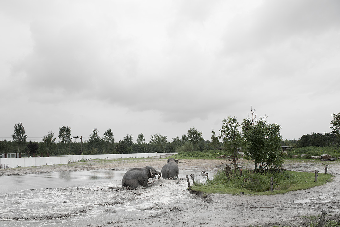 Troebel Landschap - Olifanten bij Nuenen, 2012 - Hans van Asch