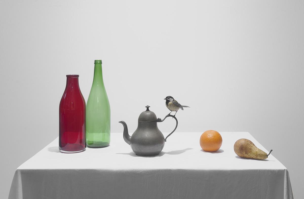 stilleven met rode en groene fles, sinasappel, peer en koolmees op tinnen theepot