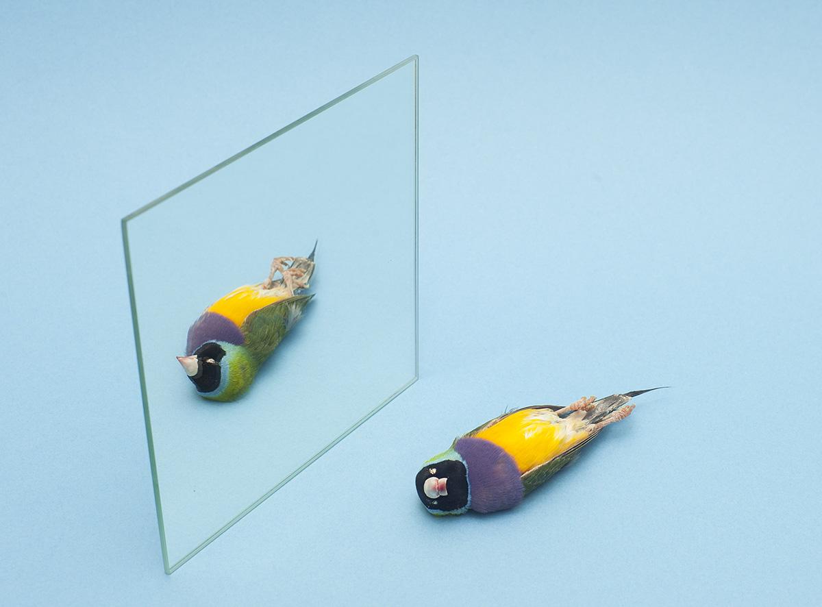 dood tropisch vogeltje met blauwe achtergrond voor spiegel