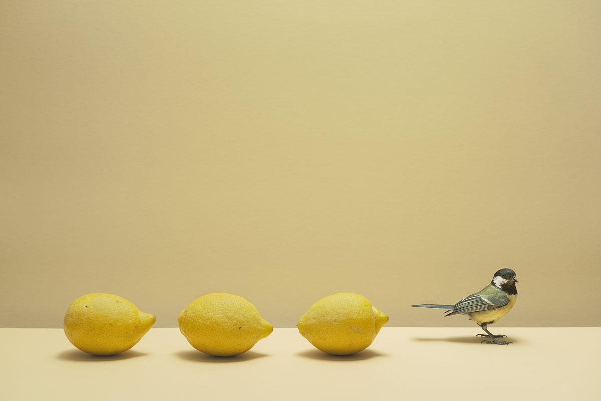 Koolmees voor reeks met drie citroenen op gele achtergrond